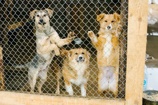 Відповідальне ставлення - ключ до вирішення проблеми безпритульних тварин