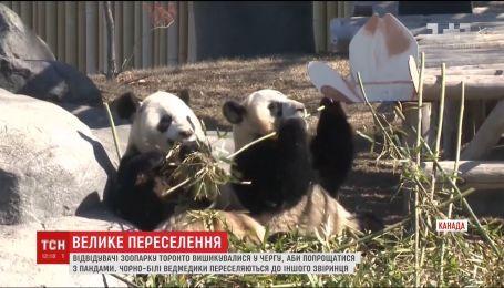 Посетители зоопарка в Торонто стали в очередь, чтобы попрощаться с семьей панд