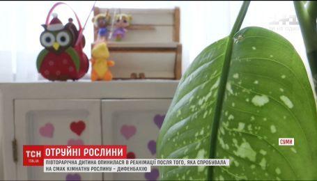 У Сумах півторарічна дитина опинилась в реанімації через отруєння кімнатною рослиною