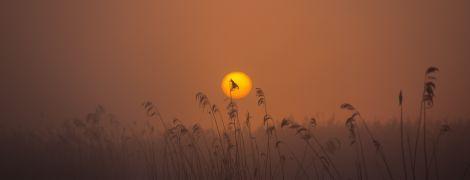 Позбудьтеся мотлоху та загадайте 9 бажань: що потрібно робити в День весняного рівнодення