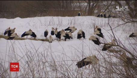 На Прикарпатье и Львовщине пытаются спасти аистов, которые могут умереть на морозе