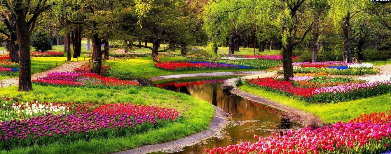 """Королівський """"Сад Європи"""" з тисячами тюльпанів відкриється неподалік Амстердама"""