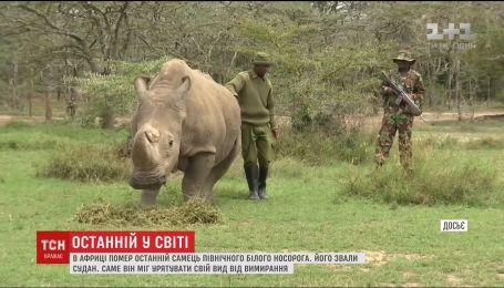 Смерть последнего самца: ученые попытаются спасти вид белых носорогов