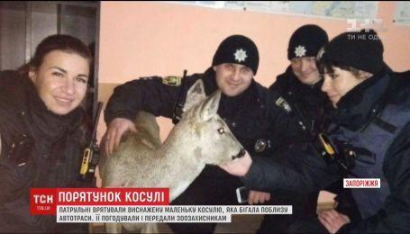 В Запорожье патрульные спасли маленькую косулю, которая бегала возле оживленной трассы