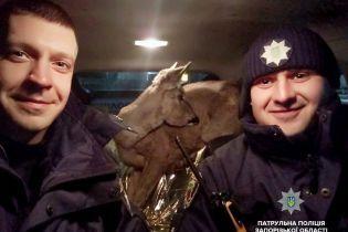 У Запоріжжі патрульні поліцейські врятували заблукалу косулю