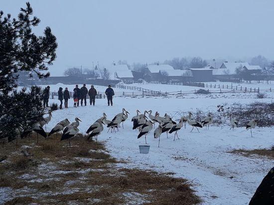 Волонтер опублікував відео, як рятують лелек у засніженій Україні