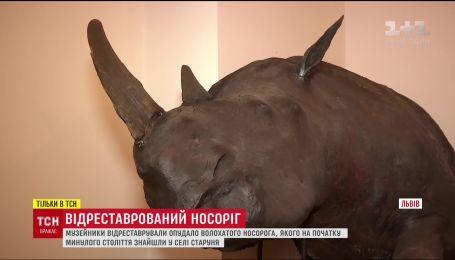 Музейники відреставрували опудало носорога, який жив на Землі понад 10 тисяч років тому