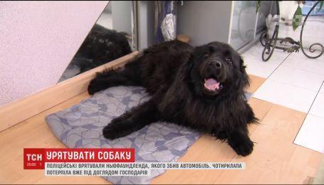 На Київщині поліцейські врятували собаку, яка лежала на дорозі й стікала кров'ю