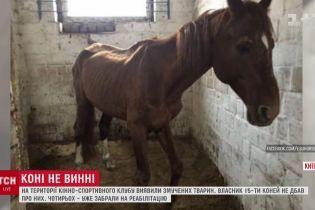 В Киеве в конюшнях конно-спортивного клуба обнаружили полтора десятка заморенных голодом лошадей