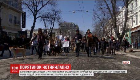 В Одессе прошел Марш спасенных собак, чтобы привлечь внимание к бездомным животным