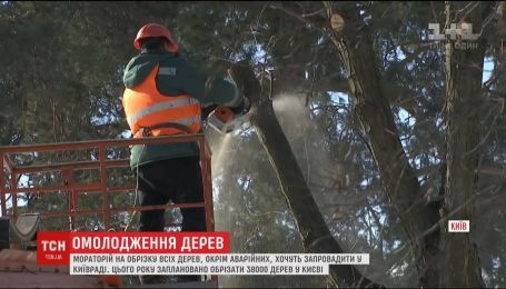 В Киеве хотят запретить радикальное обрезание деревьев