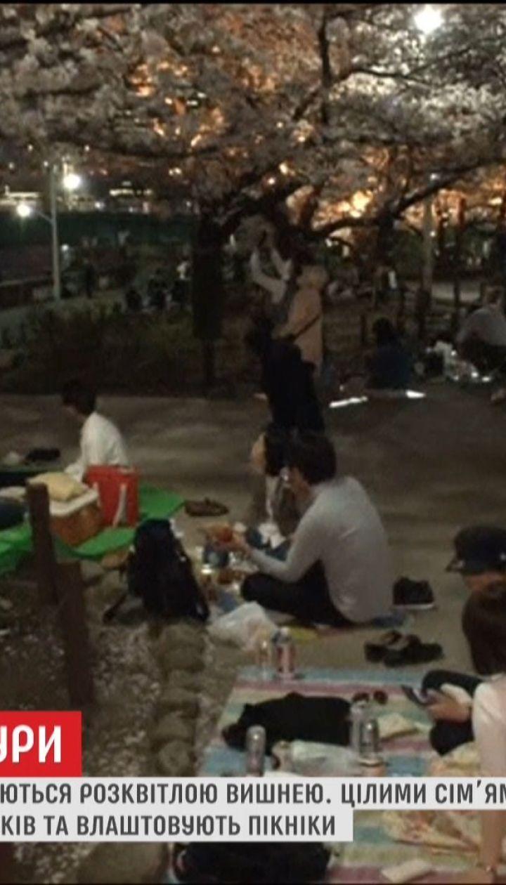 Японці цілодобово милуються розквітлою сакурою