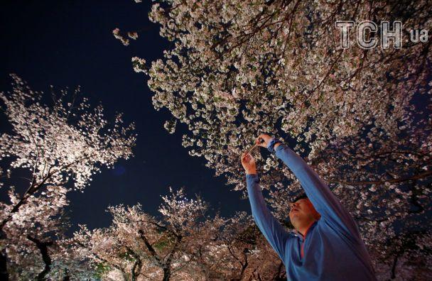 Сакури вночі: японці милуються цвітінням в неймовірній ілюмінації