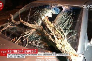 Уничтоженные деревья, электросети и погибшая женщина: Киевщина уже сутки оправляется от мощного урагана