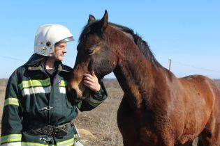 Під Полтавою в пожежі загинув чоловік, а коню вдалося врятуватися