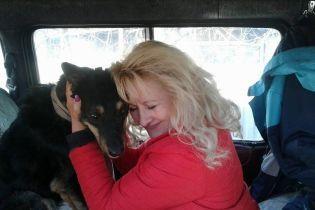 Після тримісячних пошуків у Києві знайшли травмованого собаку. Але від нього відмовилася господарка