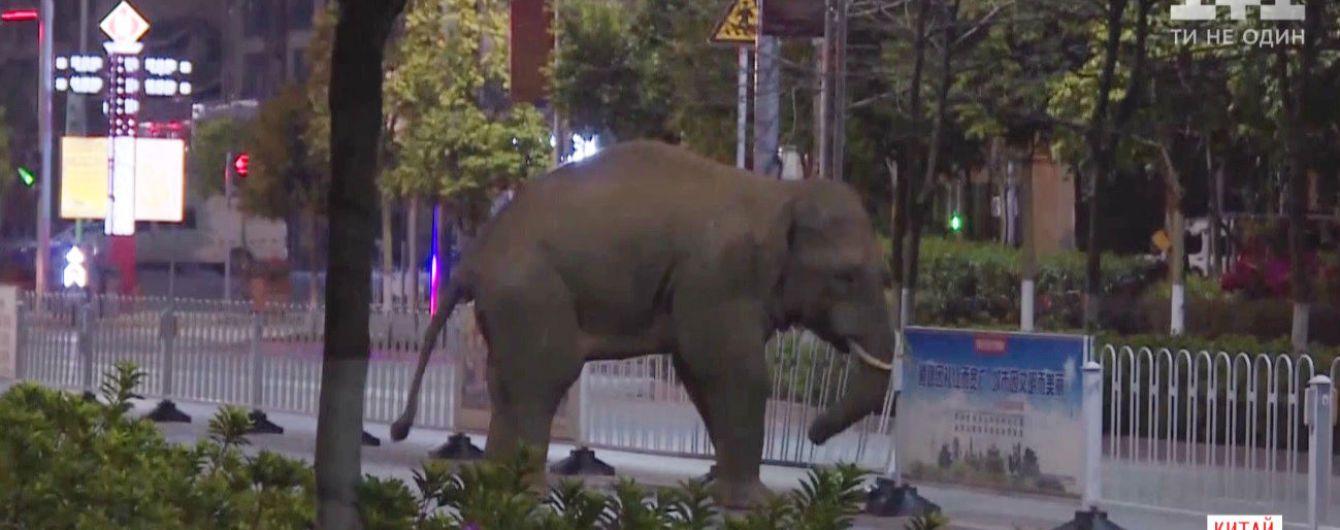 У Китаї довелося евакуйовувати людей, бо до міста забрів дикий слон