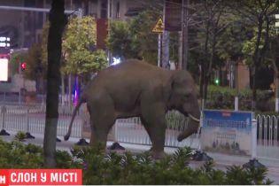 В Китае пришлось эвакуировать людей, потому что в город пришел дикий слон