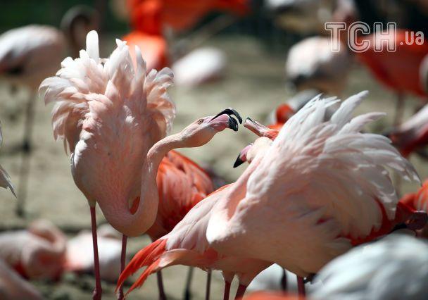 Мавпячі обійми та поцілунки фламінго. Reuters показало зворушливі фото з європейських зоопарків