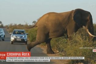 Слоняча йога посеред траси підірвала Мережу