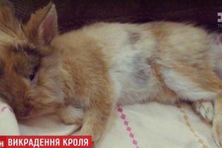 Поверніть Костю: готель в Харкові організував пошуки свого зниклого кролика