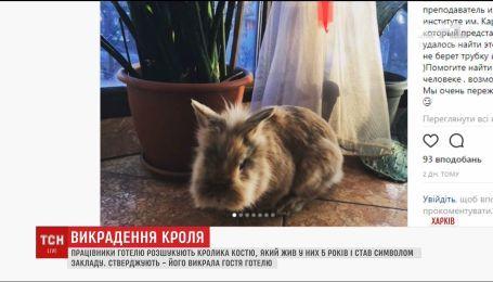 У Харкові розшукують зниклого з готелю кролика Костю