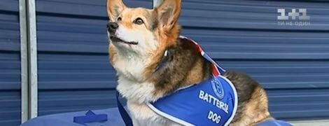 У Британії помер коргі Єлизавети ІІ: останній з історичного собачого роду