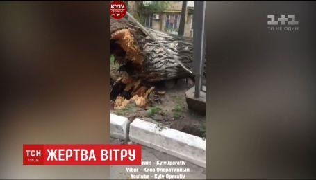 В столице из-за мощных порывов упало огромное дерево