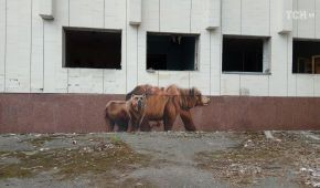 """""""Єб*ть, я вандал"""". У Прип'яті невідомі розмалювали знамениті графіті матюками і непристойними картинками"""