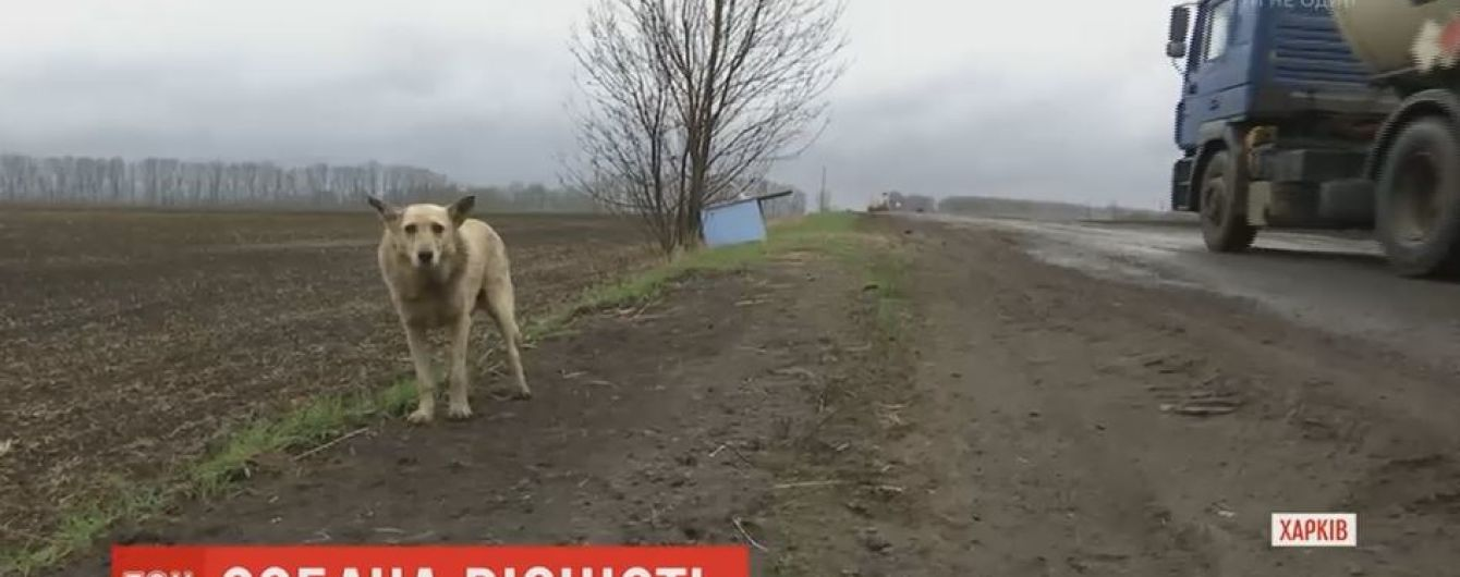 """На Харьковщине опекают местного """"Хатико"""", которого хозяева оставили в мешке при дороге"""