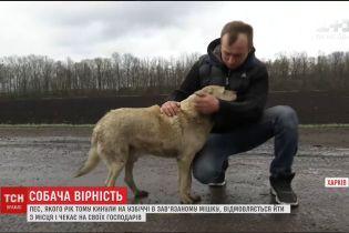На Харківщині собака вже рік сидить на узбіччі, чекаючи на своїх господарів