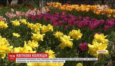 В Николаеве женщина высадила 150 видов тюльпанов на собственном огороде
