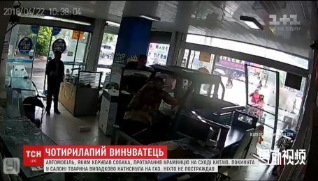 Пес за кермом фургона влаштував погром у китайській крамниці