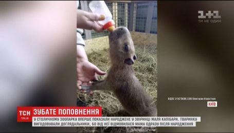 В зоопарке Киева выкармливают малыша капибары