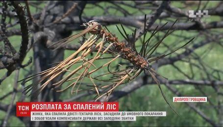 На Дніпропетровщині суд виніс вирок 66-річній жінці, яка торік знищила двісті гектарів лісу