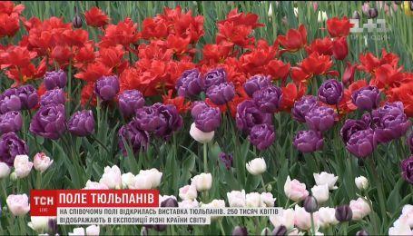 На Співочому полі відкрилась масштабна виставка тюльпанів