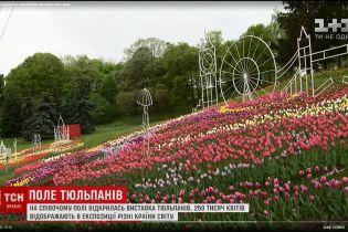 """Співоче поле вкрилося тисячами тюльпанів із композиціями """"Навколо світу"""""""