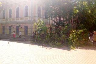 У центрі Вінниці на трирічну дівчинку впало дерево