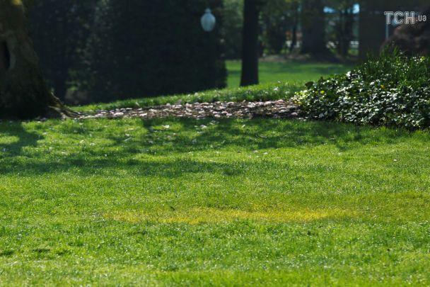 Згалявини біля Білого дому зник дуб, який посадили Трамп і Макрон