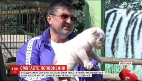 В Бердянском зоопарке журналистам показали новорожденных белых тигрят