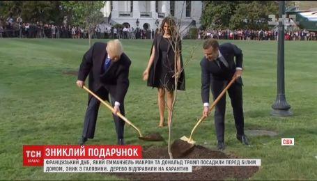 Дуб, посаджений Макроном та Трампом перед Білим домом, зник з галявини