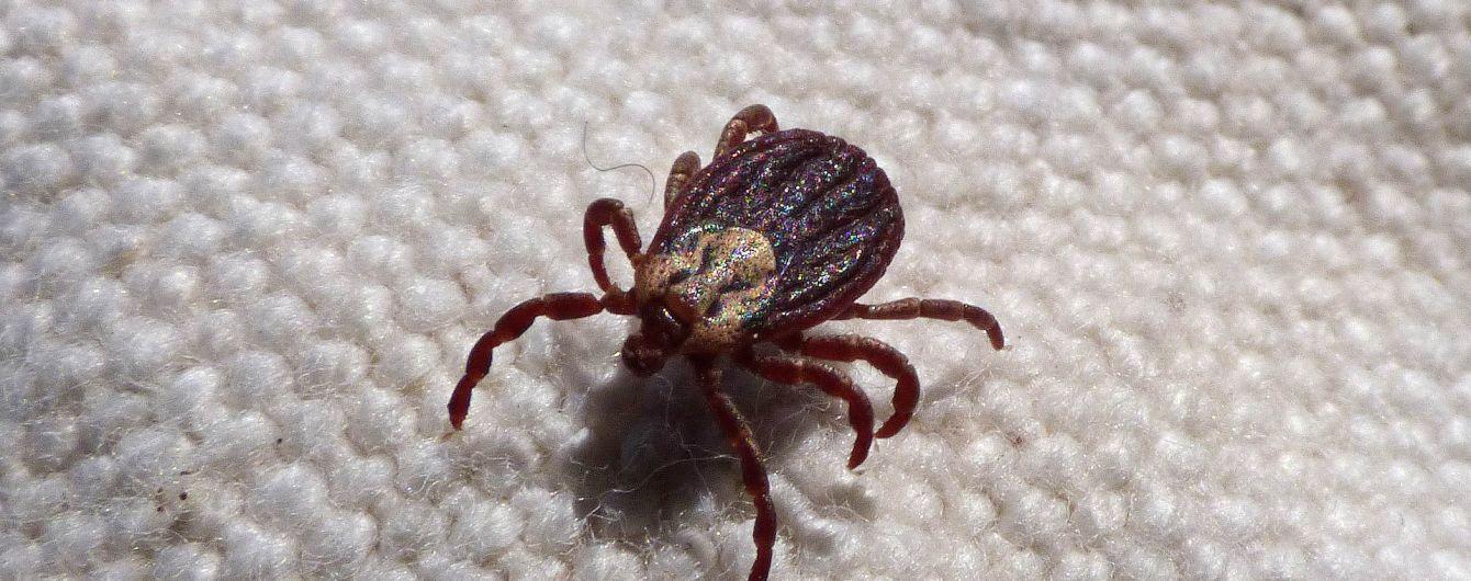 Небезпечні кровопивці: укус кліща може призвести до паралічу тіла (ВІДЕО)