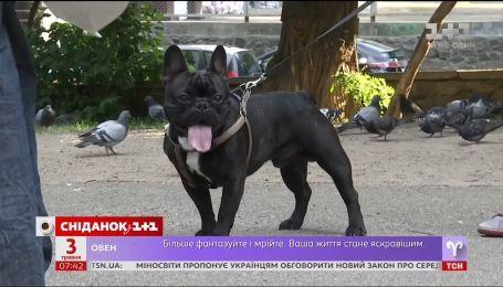 Чому собаки нападають на людей, і як із цим боротися
