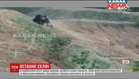В Индии медведь убил таксиста, который хотел сделать селфи с животным