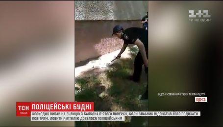 В Одесской области крокодил упал с балкона многоэтажки
