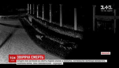 В Николаевском зоопарке бездомные собаки загрызли семью альпак
