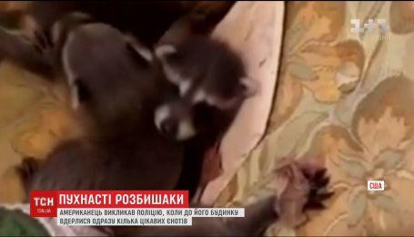 Американець викликав поліцію через неочікуваний візит до його будинку родини єнотів