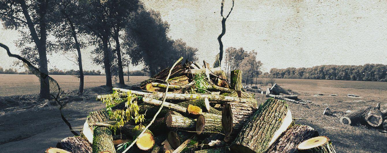 Вырезали все лесополосы. На Киевщине массово вырубают тополя вдоль дорог