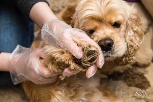 Чем опасны клещи для собак