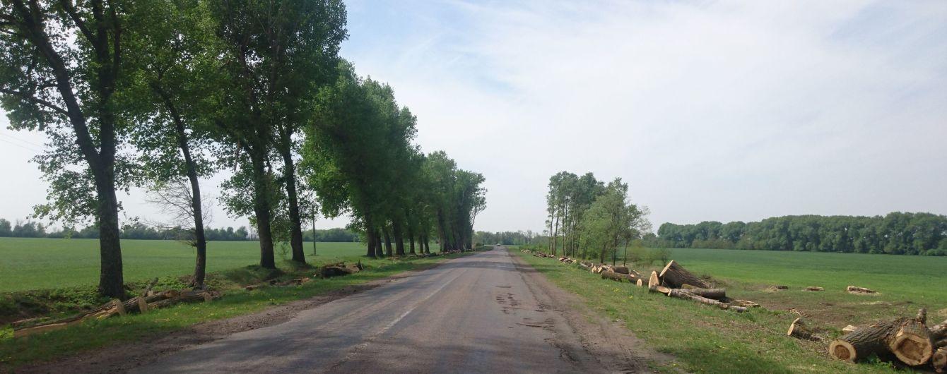 """Масове знищення тополь на Київщині. В Автодорі пояснили, чому лишили """"голі"""" дороги"""